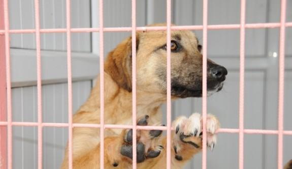 Kablo hırsızları hayvanları mağdur etti