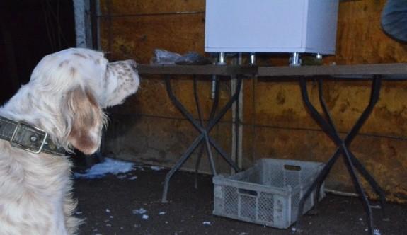 Köpeği aç kalmasın diye zaman ayarlı makine yaptı