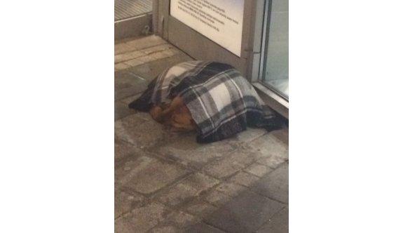 Vatandaş sokak hayvanlarını yalnız bırakmıyor