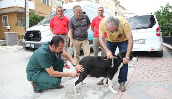 Sokak hayvanlarına aşı seferberliği