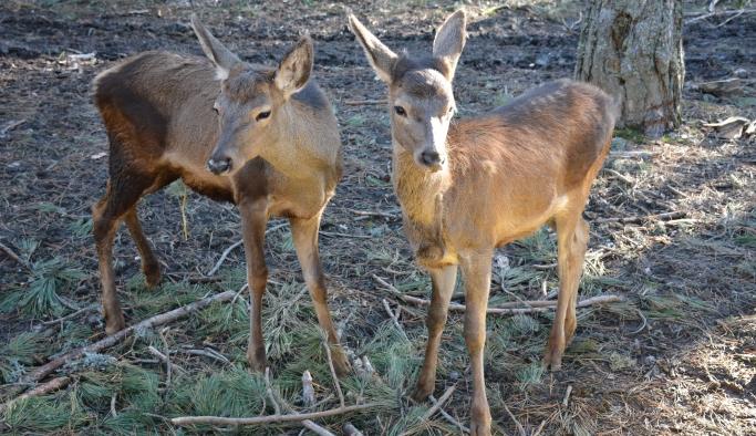 Umay ve Midas doğal hayatlarına kavuştu
