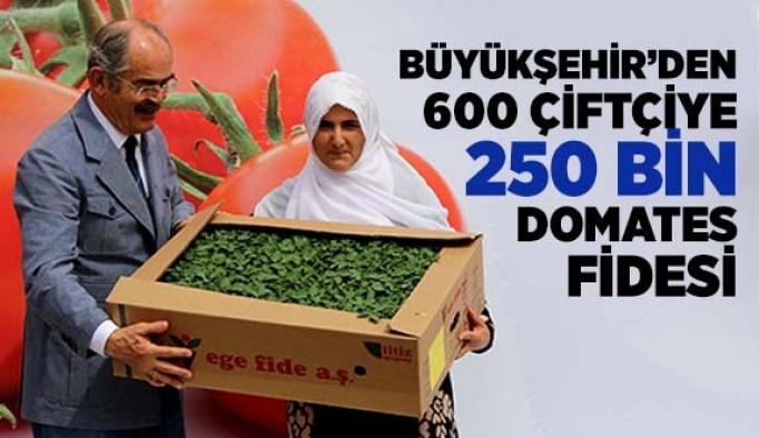BÜYÜKŞEHİR'DEN 600 ÇİFTÇİYE 250 BİN DOMATES FİDESİ