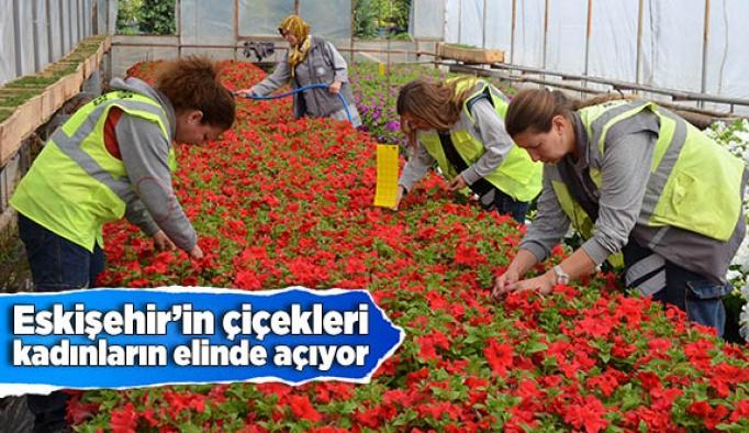 Eskişehir'in çiçekleri kadınların elinde açıyor