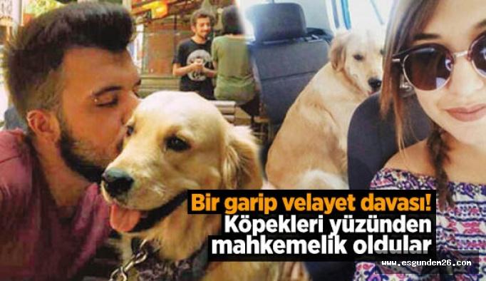 Ayrılan sevgililer köpeklerini paylaşamıyor!