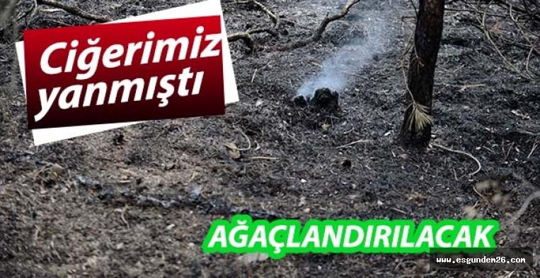 Eskişehir'de yanan ormanlık alan ağaçlandırılacak