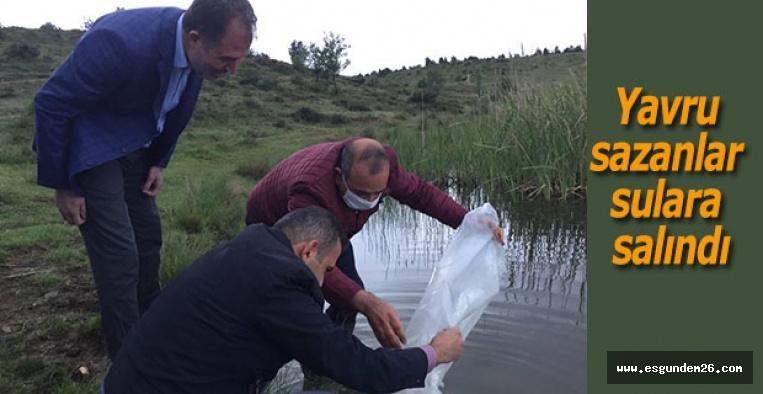 3 bin yavru sazan sulara salındı