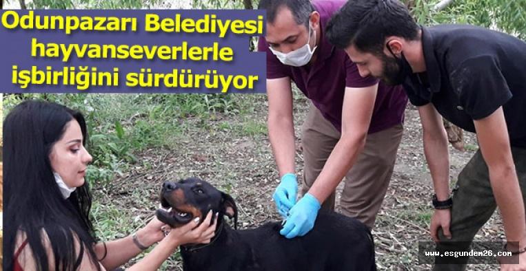 Odunpazarı Belediyesi hayvanseverlerle işbirliğini sürdürüyor