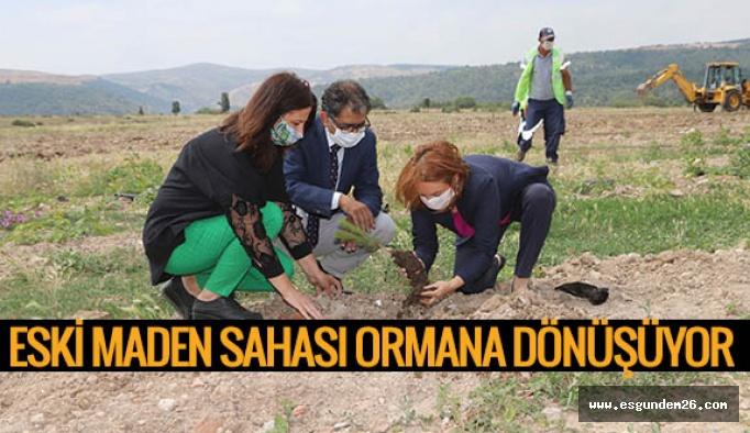 Büyükşehir, 70 bin metrekarelik eski maden sahasını ağaçlandırıyor