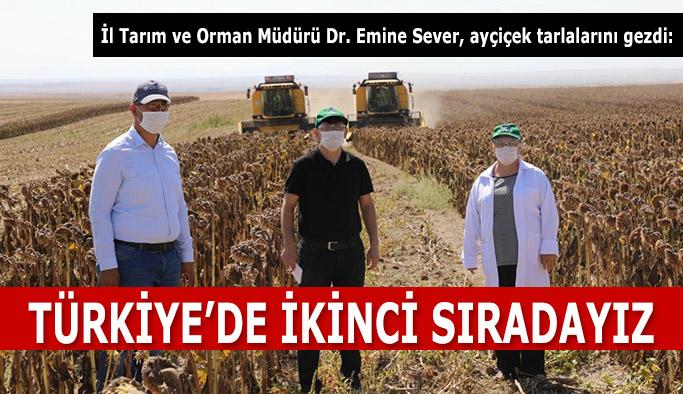 Eskişehir tohumluk ayçiçeği üretiminde Türkiye ikincisi