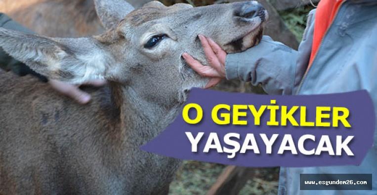 Eskişehir'deki kızıl geyik ihalesine iptal kararı