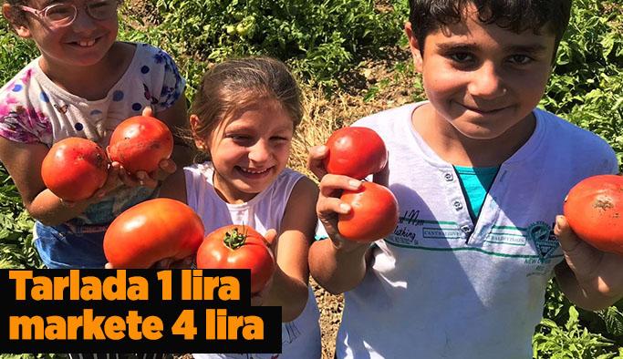 Eskişehirli domates üreticisi:Emeğimizin karşılığını alamıyoruz