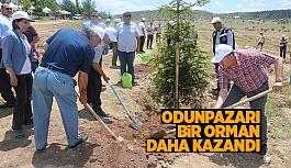 DEMOKRASİ ORMANI KURULDU