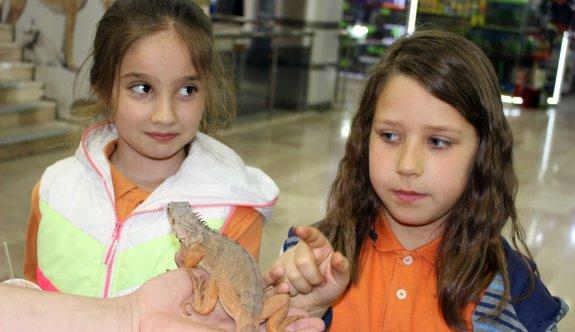 İguanalar çocukların ilgi odağı oldu