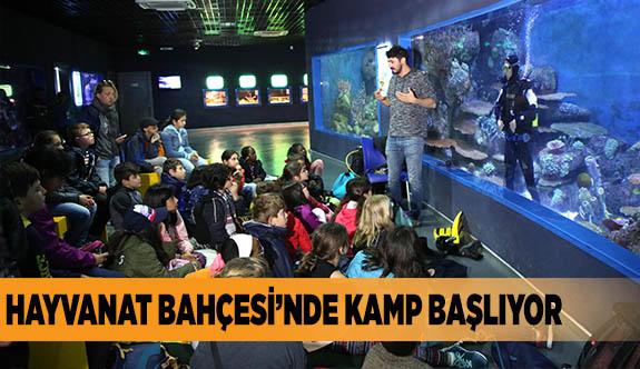 HAYVANAT BAHÇESİ'NDE KAMP BAŞLIYOR