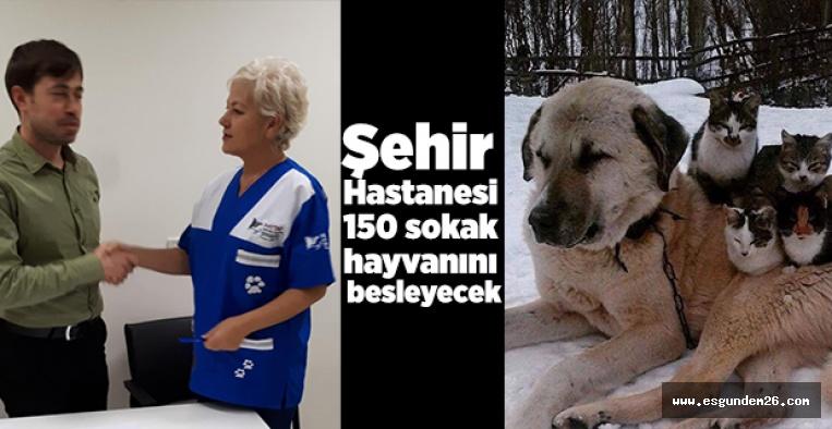 ŞEHİR HASTANESİ 150 SOKAK HAYVANINI BESLEYECEK