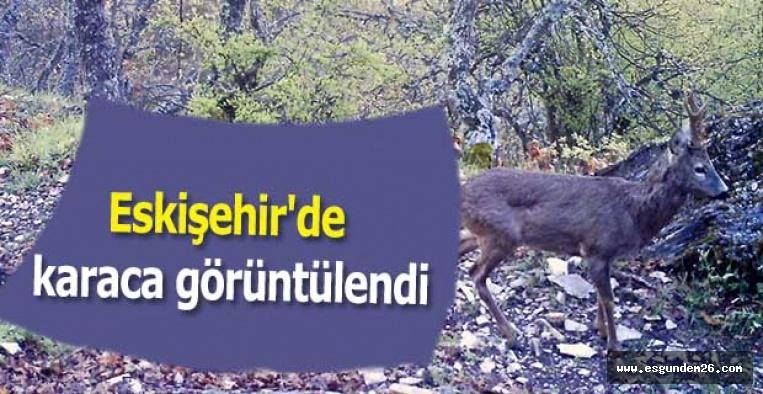 Eskişehir'de karaca görüntülendi