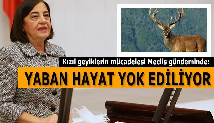 CHP'li Süllü: Gündemde tutmaya devam edeceğim