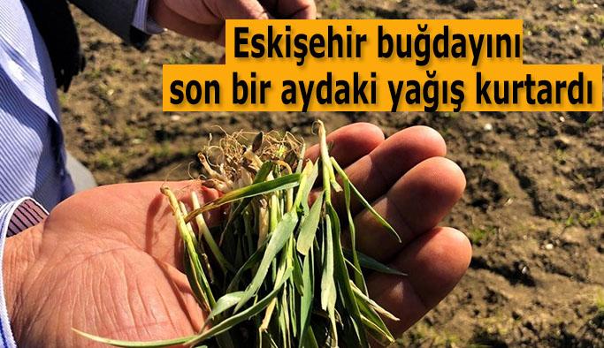 Yağış gören buğday, 'kardeşlenme' aşamasında