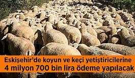 Eskişehir'de koyun ve keçi yetiştiricilerine yaklaşık 4 milyon 700 bin lira ödeme yapılacak